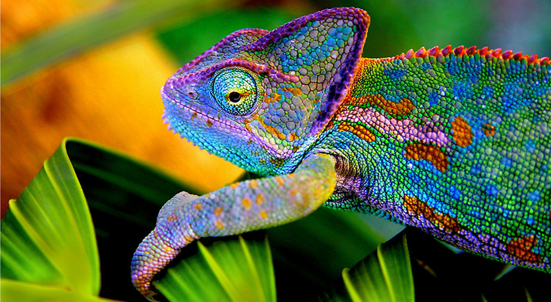 2redbubble-compeoplemasterpiececreationsworks588850chameleon